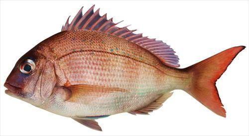 fish-3410329_1280_R