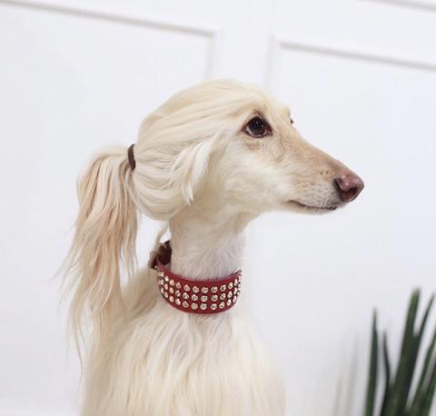 【AKB48】ゆきりんに激似の犬が見つかるwwwwww【柏木由紀】
