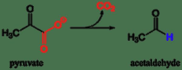 ピルビン酸脱炭酸酵素