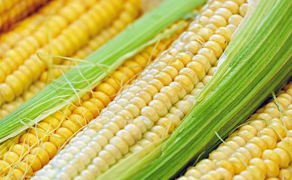 トランプ大統領「中国が約束したことを実行しない。トウモロコシが余ってる」…トウモロコシ 日本が買います