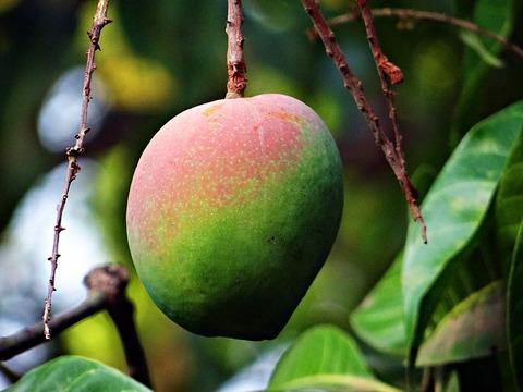 mango-321080_640