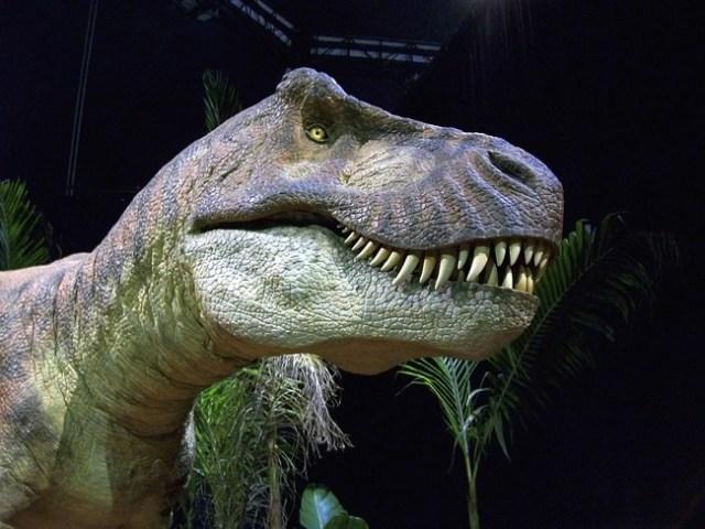 dinosaur-344131_960_720