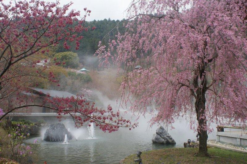 「勝尾寺 桜」の画像検索結果