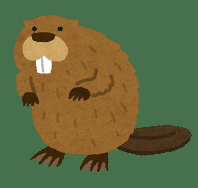 animal_beaver