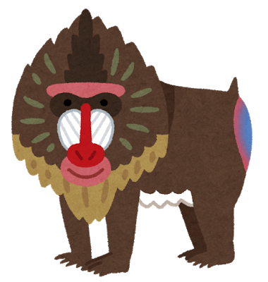 animal_mandrill