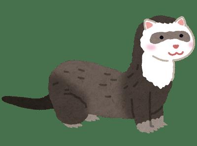 animal_ferret