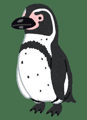 penguin16_humboldt