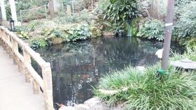 杵築神社 池