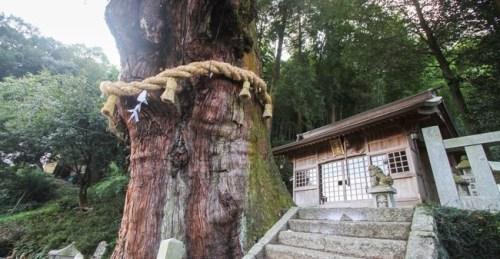岐阜県 ご神木 倒壊 に関連した画像-01