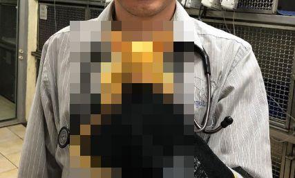 ピカチュウ 動物 ポッサム 黄色 激似に関連した画像-01