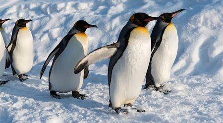 ペンギン 宇宙人 金星 フン 鳥 に関連した画像-01