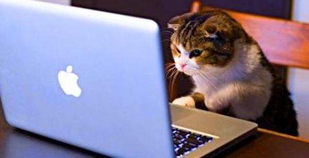 MMO 猫 キーボード PC FF14に関連した画像-01