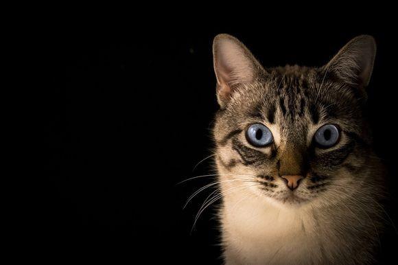 cat-face_pixabay