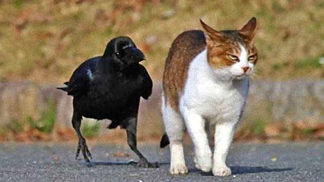 crowsnanimals4_ea