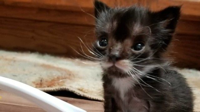 kitten-1_e