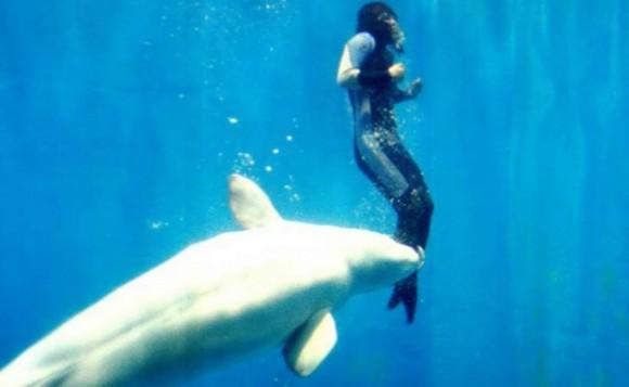 動物たちの無償の愛。人間を助けた10の動物たちの物語 : カラパイア