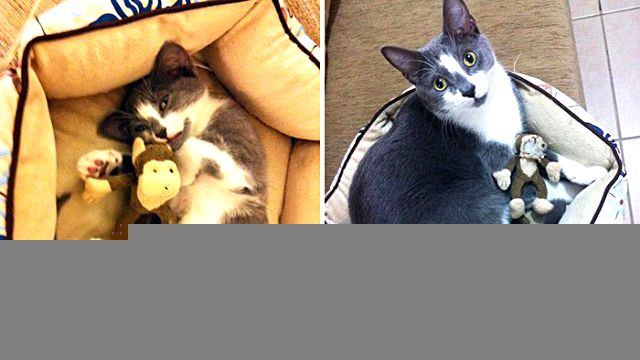 pets-growing-up-with-toys-1101__700_ea