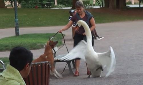 「白鳥 犬」の画像検索結果