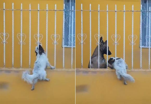 犬が柵にハマって大ピンチ! 助けたのは…仲良しワンコだった에 대한 이미지 검색결과