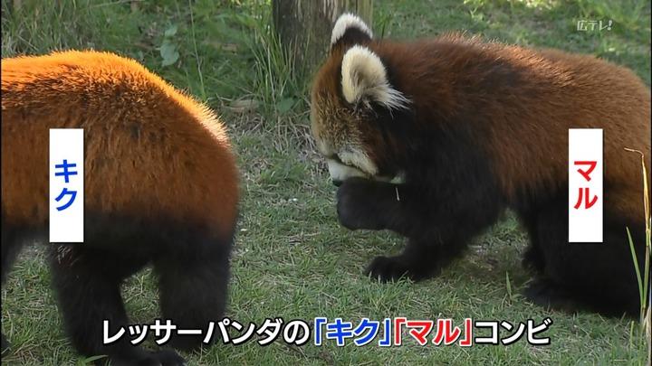 安佐動物園キクマル2