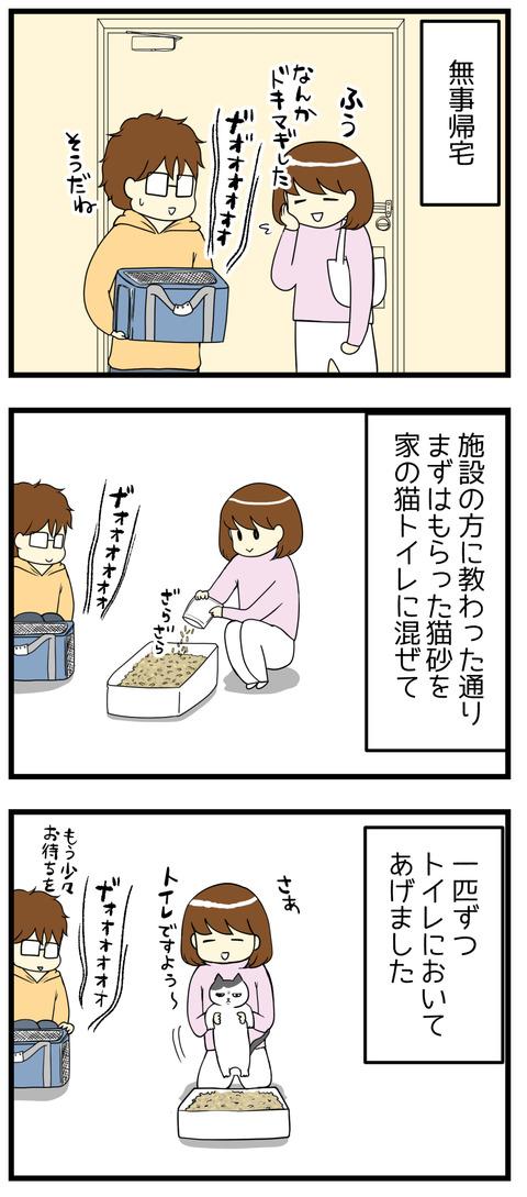 施設の方に教わった通りなにはともあれ猫トイレの準備をして、無事に一発OK!