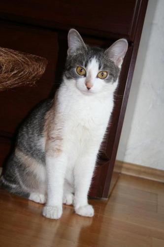捨て猫09