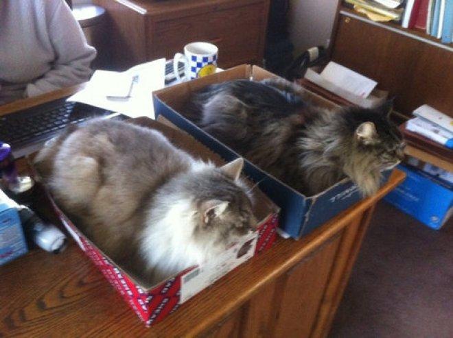 「猫仕事」の画像検索結果
