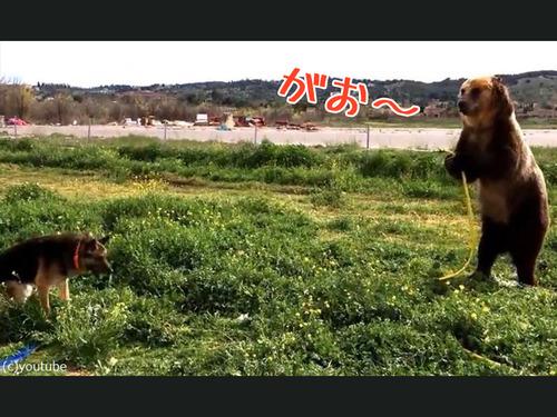 水遊びを楽しむ熊と犬00