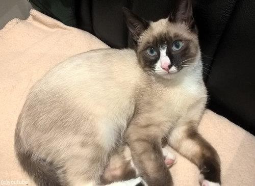ガソリンスタンドに捨てられていた子猫14
