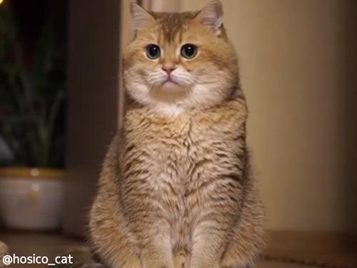 もっちもち猫00