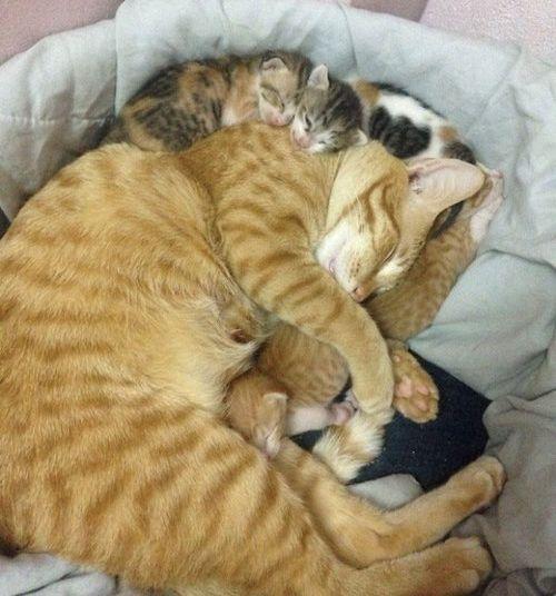 家族愛の強いパパ猫10