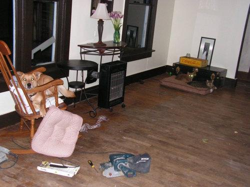 猫にベッドを奪われる犬たち16
