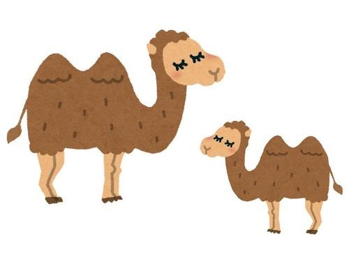 ラクダの親子の会話