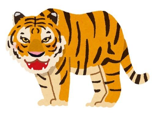 虎は高くて買えないという人に