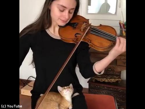 バイオリン演奏を大人しく聴く猫00