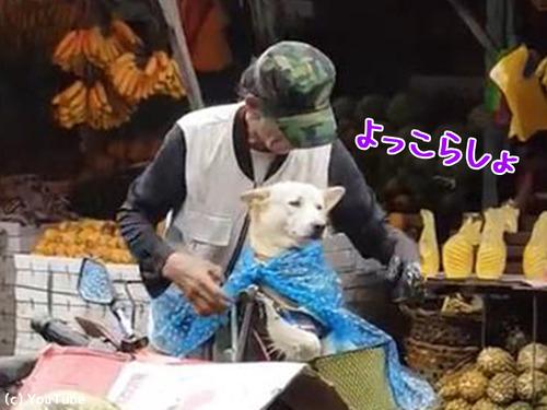 降りだした雨…飼い主さんが愛犬にとった行動に心温まる00