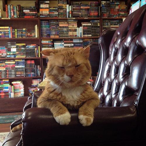 本屋の猫02