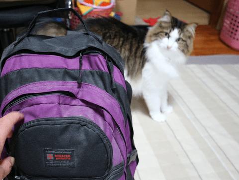 猫を連れての避難 備蓄