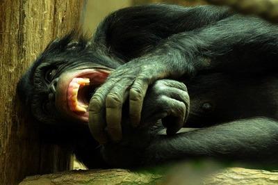 monkey-89911_640