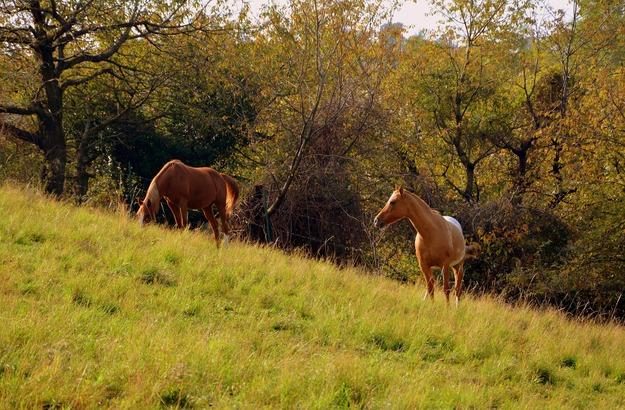 horse-2862272_1920