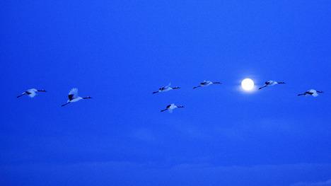 140908満月とツル@北海道 釧路