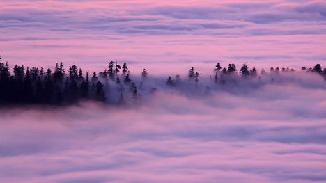130814レッドウッド国立州立公園@アメリカ カリフォルニア州