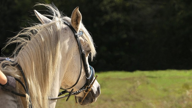 horse-3030892_1920