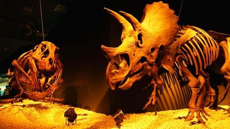 140516トリケラトプスの化石@東京 上野