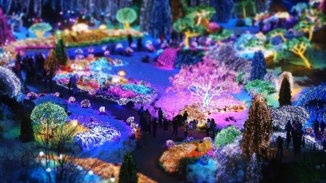 131224アチムゴヨ樹木園