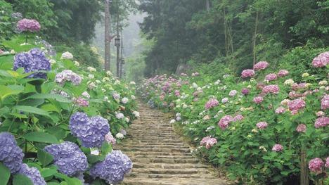 140619太平山県立自然公園@栃木 栃木市