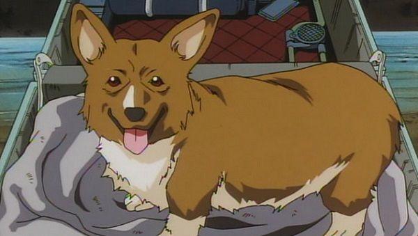 多くのツイッタラーより高學歴な犬が誕生する : くまニュース
