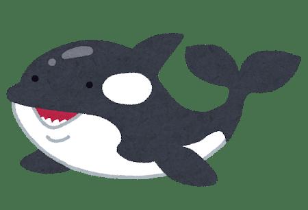 animal_shachi_killer_whale