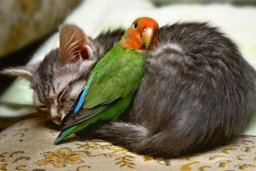 貓×鳥 : 【可愛さ爆発!】違う種類の動物達の仲良しもふもふ ...