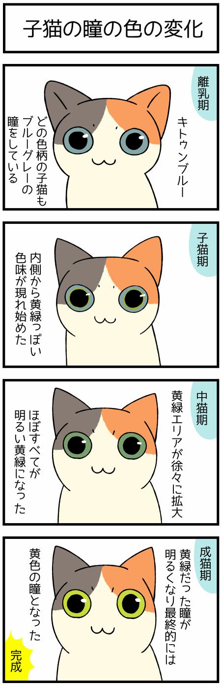 20200619猫の瞳1